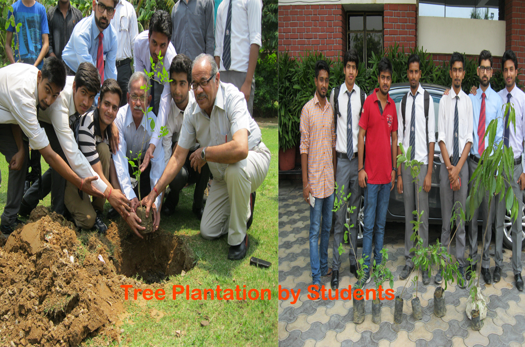 tree-plantation.png